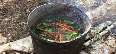 The Ayahuasca
